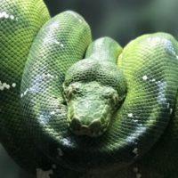 30 Most Fascinating Animal Photos