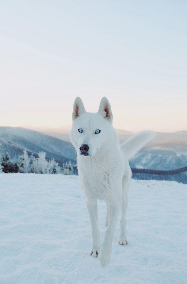 80 Best Animal Photos Ever Taken